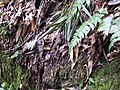 磐古蟾蜍 Bufo bankorensis - panoramio.jpg