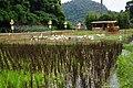 綠博鴨旅舍 GreenExpo Duck Inn - panoramio.jpg