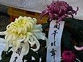 菊展 Chrysanthemum Show - panoramio.jpg