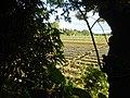 0126jfLandscapes Sunsets Fields Maronquillo San Rafael Bulacanfvf 13.JPG