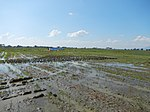 03306jfBirds Sanctuary Ducks Wetland Marshes Rice Fields Candaba Pampangafvf 10.JPG