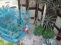 05704jfMidyear Orchid Plants Shows Quezon Cityfvf 05.JPG