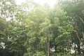 1003 ป่าเขียวในอุทยานแห่งชาติทุ่งแสลงหลวง.jpg