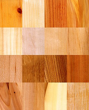 Dendrology - Image: 16 wood samples
