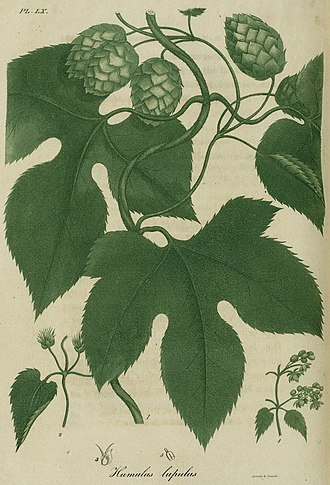 Annin & Smith - Image: 1820 60 American Medical Botany engr by Annin and Smith 3542676899