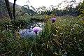 191102 Hakone Botanical Garden of Wetlands Hakone Japan05.JPG