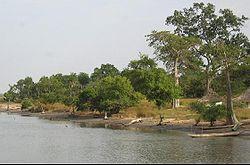 1917323-south bank of the Bintang Bolong-The Gambia.jpg