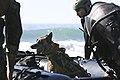 1st MSOB Canine Handler Surf Passage and Zodiac insert training 160209-M-AX605-194.jpg