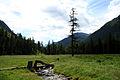 2006-07 altaj steppe.jpg