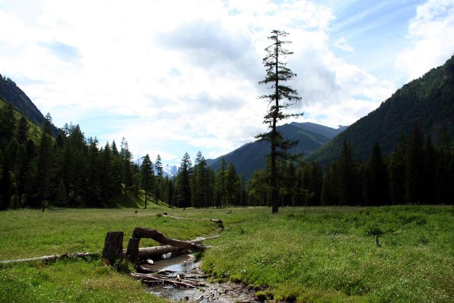 2006-07 altaj steppe