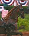 2009 Shelbyville Horse Show (3867466063).jpg