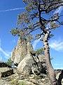2010-09-11 rocas y pino - panoramio.jpg