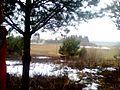 2010 03 - 04 - panoramio - DonatasPTN (2).jpg