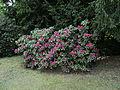 2012-05-15 Rhododendronpark Rathen 5.JPG
