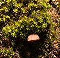2012-11-29 14-57-14-champignon-sur-arbre.jpg