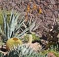 2014, Desert Landscaping - panoramio.jpg