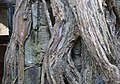 2014-Cambodge Ta Prohm (14).jpg