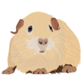 201408 guinea pig.png