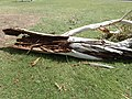 2016-02-16 A large branch that fell in a school playground.jpg