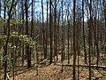 2016-03-01 12 45 13 Forest within Fred Crabtree Park in Reston, Fairfax County, Virginia.jpg
