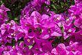 2016-04-03 Flower at the Singapore Botanic Gardens 05.jpg