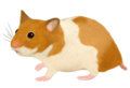 201606 hamster.png