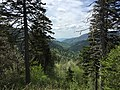 2017-05-17 14 37 09 View west-northwest from Newfound Gap within Great Smoky Mountains National Park, in Sevier County, Tennessee.jpg