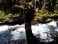 2017-07-09 Sahalie Falls 06.jpg