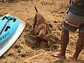 2019 Scotland Island Pittwater NSW Christmas Day pooch race 5.jpg