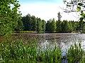 2172. Lake Sobach'e in the park Sosnovka.jpg