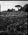 24.06.1964. Vue de la propriété. (1964) - 53Fi4708.jpg