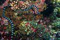 39-EastTimor-Dive Atauro 68 (Sea Snake)-APiazza.JPG