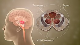 Animazione medica 3D ancora girato che mostra diverse parti del cervello medio