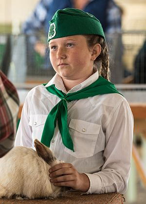 4-H - Girl presenting her rabbit at the Calaveras County Fair in California 2016