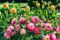 ADD SOME COLOUR TO YOUR LIFE (FLOWERS IN A PUBLIC PARK)-120124 (29164820842).jpg