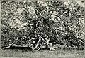 A - birding on a bronco (1896) (14568711930).jpg