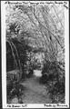 A Recreation Trail through Vine Maples, Douglas Fir Camp, Mount Baker National Forest, 1936. - NARA - 299066.tif