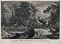 A group of deer around a lake in a forest. Etching by J.E. R Wellcome V0020992.jpg
