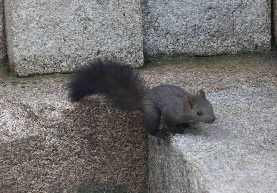 A squirrel in South Korea