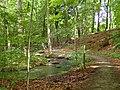 Aarslev Møllepark (skoven) 02.jpg
