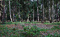 Abdeckung des Schachtes in Klein Oedesse (Gemeinde Edemissen) - Schachtanlage Oedesse.JPG