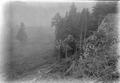 Abgeholzter Wald - CH-BAR - 3237756.tif