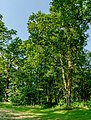 Admont Eichelau 3447 Mercator 3.jpg