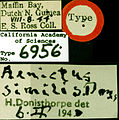 Aenictus ceylonicus castype06956 label 1.jpg