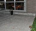 Affenpinschers and Hedgehogs don't mix. (40445266563).jpg