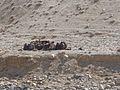 Afghan peasants (32214816410).jpg
