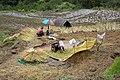 Agriculture in Bhutan 04.jpg