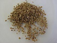 graine de carvi