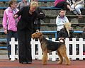 Airedale Terrier view.JPG