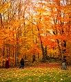 Algonquin park.jpg